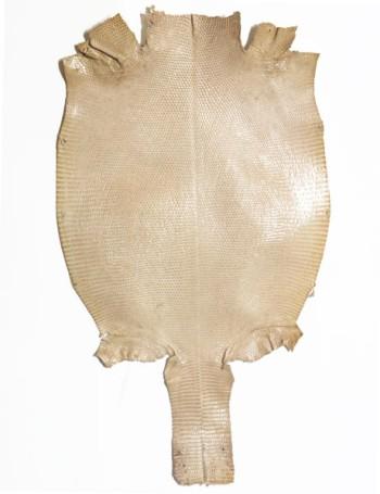 バリュープライス・リザード:幅15cm以上