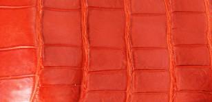 ナイルクロコダイル、ビッグタイル切り売り サイズA(5cm×10cm)